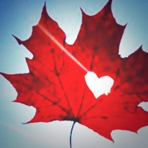"""O Canada!  """"True Patriot Love…"""" StillLives!"""