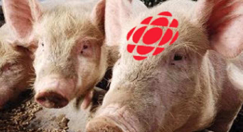 The CBC:  Public BroadcastingPiggy